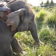 Вид с нашего слона