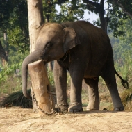 Так спят слонята