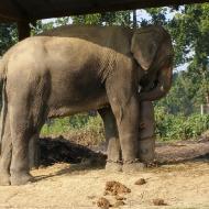 Так спят слоны