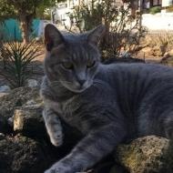 Кот в Пафосе