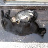 Местные коты, кошки и котята